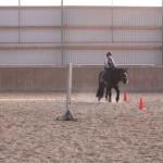 11cathorse003-reitschule