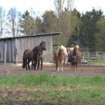 Aushilfe (m/w/d) gesucht: Wer hilft uns bei den Paddocks und bei der Pferdefütterung?