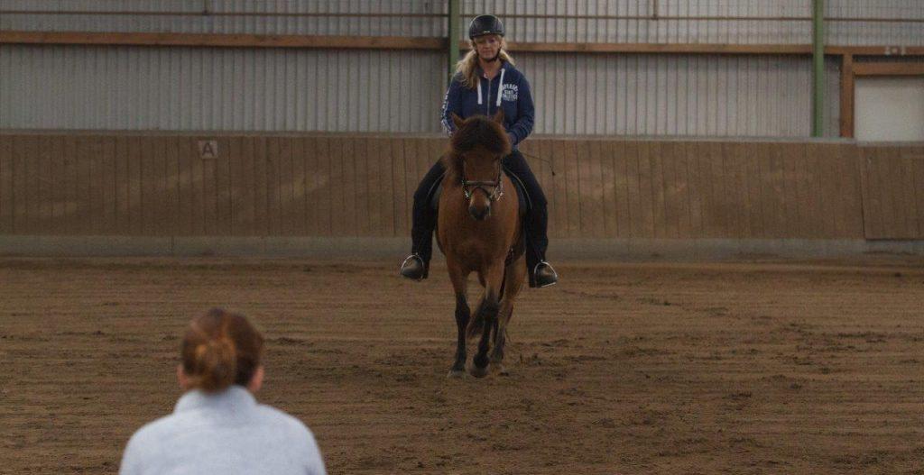 Unterricht am Schanzenhof mit dem eigenen Pferd