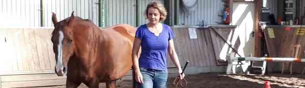 Pferde besser verstehen - Kurs auf dem Schanzenhof